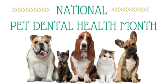 national-pet-dental-health-month